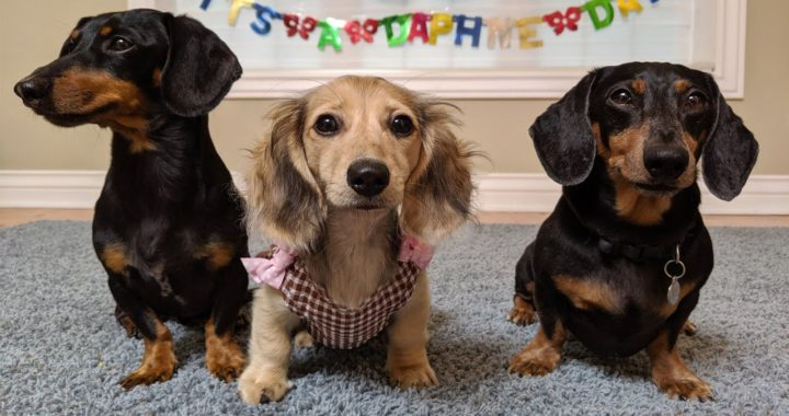 Crusoe's NEW Sister: DAPHNE and Her Baby Shower!!