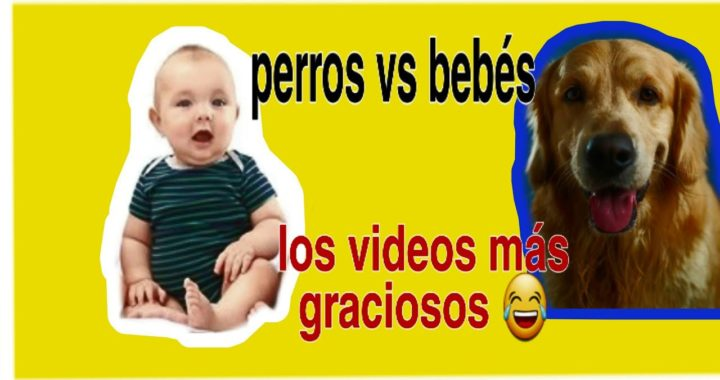 VIDEOS MAS TIERNOS🥰GRACIOSOS😂,BEBES VS PERROS (ULTIMOS VIDEOS PARA DESPEDIR 2019)MORIRAN DE RISA